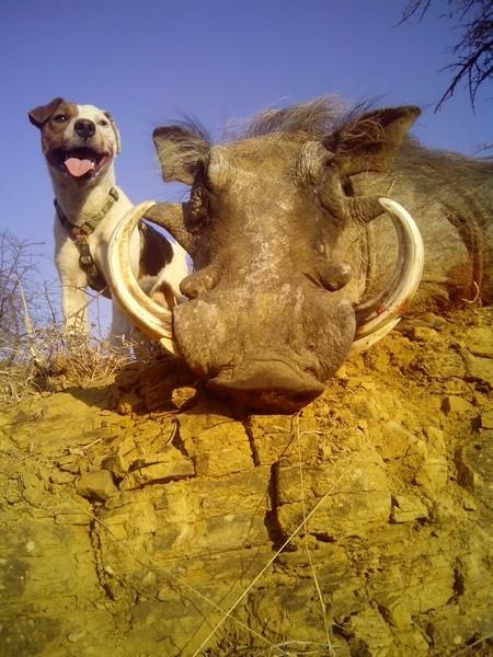 aloeafricahunting00017